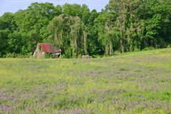 Shack & Flowers. A shack near kudzu covered woods, purple flowers in the foreground stock photography