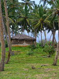 Shack in the jungle Stock Images