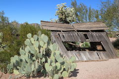 Shack. Old wooden shack at a mining town surrounded by cactus Stock Images