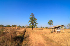 Shack in parched rice field Royalty Free Stock Images