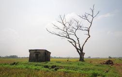 A shack on rice field in Phu Tho, Vietnam.  Stock Photography