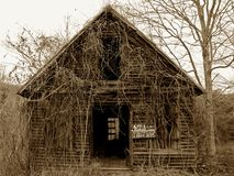Shack for sale. Old cabin for sale covered in vines Royalty Free Stock Photo