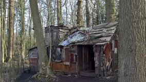 Shack, Tree, House, Shed Royalty Free Stock Image