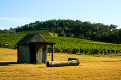 Shack In A Vineyard Stock Photo
