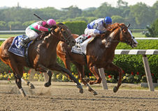 Shackleford Wins The Metropolitan Royalty Free Stock Image