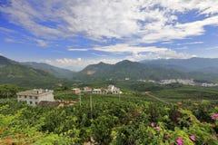 Shaddockkoloni av Pinghe County Arkivfoto