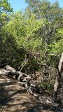 Shadey Tree-Lined Path Royalty Free Stock Photos