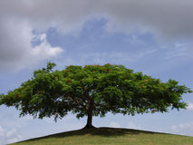 Shade. A shapely tree provides shade and shelter from an approaching storm stock image