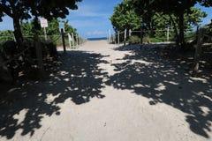 Shade. Beauty Trees shade Stock Photography