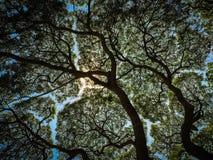 Shade. Big Tree royalty free stock photos