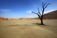 Shade of a dead tree on Deadvlei Stock Photo