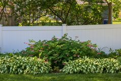 Shade garden with hosta and bleeding heart royalty free stock photography