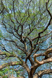 Shade of Giant tree. With colorful fabric Royalty Free Stock Photography