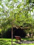 Shade giving tree and shade enjoying bench. Shade providing tree above a bench in an urban park Royalty Free Stock Photos