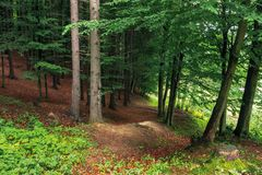 In the shade of a green forest. Beautiful nature background stock image