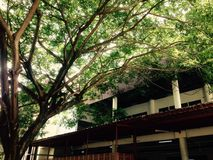 Shade. Large trees provide shade to the building royalty free stock images