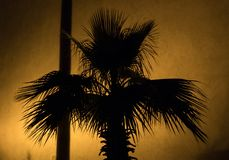 Shade of a Palm tree on an ancient Castle wall at night with warm illumination.  royalty free stock photos