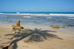 Shade of palm tree on a sandy beach Stock Photos