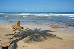Shade of palm tree on a sandy beach Stock Photos