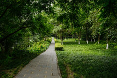 Shade pavement in verdant plants and trees of sunny summer Stock Photos