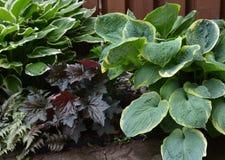 Shade plants. Closeup of Various plants for the shade in a garden stock photos