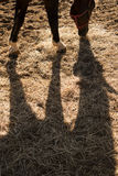 Shade projected by a horse. Shade projected to earth by a horse in the late afternoon Stock Photography