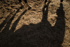 Shade projected by a horse. Shade projected to earth by a horse in the late afternoon Royalty Free Stock Photos