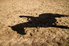 Shade projected by a horse. Shade projected to earth by a horse in the late afternoon Stock Photo