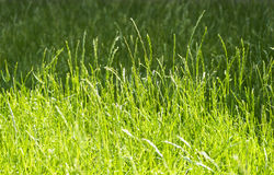 Shade and shadow of meadow on sunny. Selective focus of meadow in shade and shadow Royalty Free Stock Photography