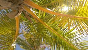 Shade from the sun. Relaxing under the palm trees, Sun peeking through Royalty Free Stock Photos