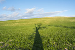 Shade of a tall tree on a green field Stock Photos