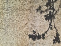 Shade of a tree blossoming on a concrete wall. Bacground texture royalty free stock image