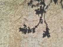 Shade of a tree blossoming on a concrete wall. Bacground texture royalty free stock photos