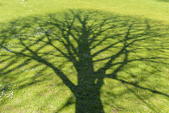 Shade tree. Shade of a tree at a green meadow Stock Image