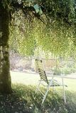 Shade tree. Relaxing under a tree on a hot summer day stock photos