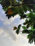 shade tree royalty free stock photo