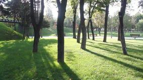 Shade trees on grass Royalty Free Stock Photo