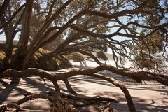 In the shade of trees in Orokawa reserve, New Zealand. Evening on the beach, natural environment royalty free stock images
