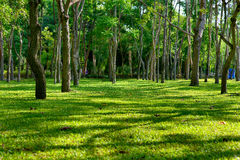Shade trees in a park. Stock Photos