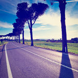 Shade. Of the Trees on a Paved Road in Tuscany, Italy, Instagram Effect Royalty Free Stock Photo