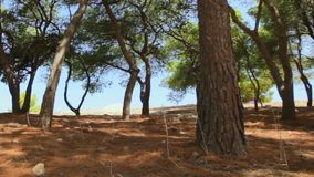 Shade of trees on a sunny day to sounds of cicadas. In the shade of trees on a sunny day to the sounds of cicadas. Greece stock footage