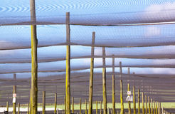 Shadecloth Supported By Wooden Poles In Commercial Nursery Stock Photo