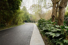 Shaded asphalt road in spring Royalty Free Stock Photography
