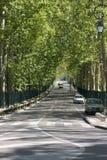 Shaded avenue. Tree shaded avenue in Lamanon France royalty free stock photos