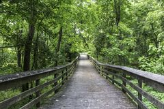 Shaded boardwalk in the woodlands. Summer sunlight and shade on wooden boardwalk. Canawaugus park in Scottsville, NY royalty free stock photo