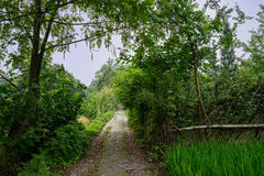 Shaded countryroad in verdant sunny summer Royalty Free Stock Photos