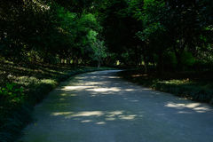 Shaded curving road in woods of sunny summer afternoon Royalty Free Stock Photos