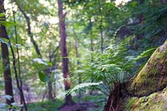 Shaded Fern. Fernforest trees moss lush royalty free stock photography