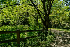 Shaded footpath alongside wooden fence in sunny summer woods Royalty Free Stock Photos
