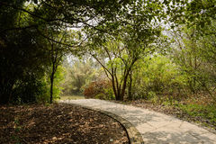 Shaded footway in woods of sunny spring Royalty Free Stock Photos